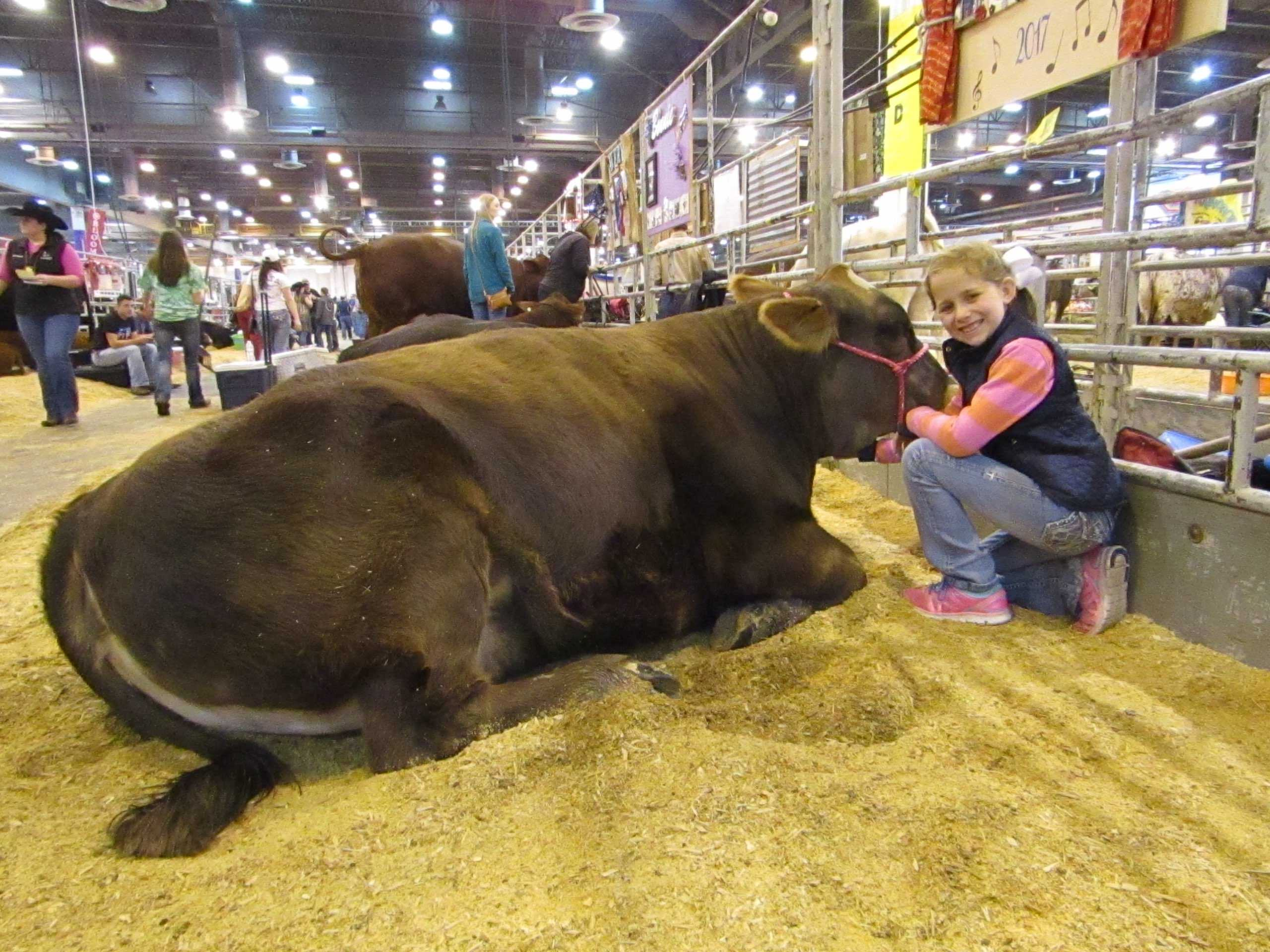 Kiersten Priddy with her heifer named Sweet Caroline at the Houston Livestock Show and Rodeo a day before their showing at the Calf Scramble Beef Heifer Show in the NRG Center.